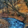 Beautiful river in the forest at winter — ストック写真
