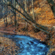 Beautiful river in the forest at winter — Stock fotografie