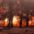 Stock Photo: Forest in sunset