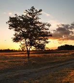Sunset on the fields — Stock Photo