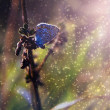 Blue butterfly in sunset and rain — Stock Photo
