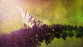 Butterfly in sunset and rain — Stock Photo