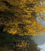 Podzimní strom a jezero — Stock fotografie