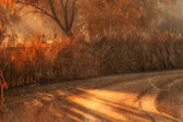 Höst skog och sjö — Stockfoto