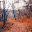 Beautiful autumn forest — Photo