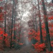 Autumn forest — Stockfoto #19422833