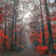 Autumn forest - Stok fotoraf