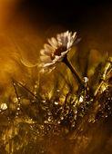 Vilda blomma i solnedgången — Stockfoto