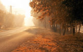 Lonely road on a cold and foggy morning — Stock Photo