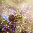 Butterfly in rain and sunset - Stock Photo