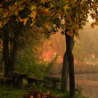Stockfoto: Autumn forest and lake