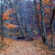 Autumn forest — Stockfoto