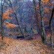 Autumn forest — Stockfoto #19489509