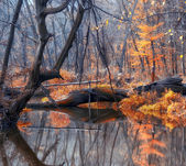 Noorse lake met autumn forest — Stockfoto