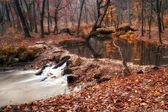 Fiume e la foresta d'autunno — Foto Stock
