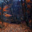 Autumn forest - Stock Photo