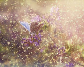 Butterfly in rain and sunset — Stock Photo