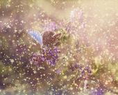 Fjäril i regn och solnedgång — Stockfoto
