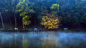 Beautiful lake with forest and wild ducks — Stock Photo
