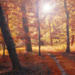 Stock Photo: Autum forest