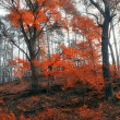 Autumn forest — Stock fotografie