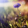 Beautiful wild flower in heavy rain — Stock Photo #19526325