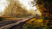 Traffic on the road through forest in sunset — Stock Photo