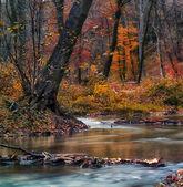 在森林里美丽的河 — 图库照片