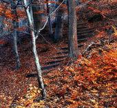 Sonbahar ormanının — Stok fotoğraf