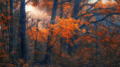 Autumn forest in sunset — Stock Photo