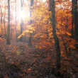 Royalty-Free Stock Photo: Forest in sunset