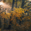 Beautiful autumn forest in sunset — Stock Photo