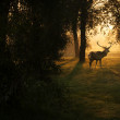 Beautiful deer in the forest with amazing lights at morning in October — Stock Photo