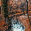 Beautiful river and forest landscape — ストック写真
