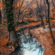 Beautiful river and forest landscape — Stock fotografie