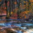 Beautiful river in the autumn forest — Stock Photo