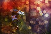 Beautiful blue wild flowers in sunset — Stock Photo