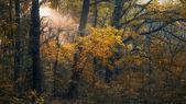 Sonbahar ormanda günbatımı — Stok fotoğraf