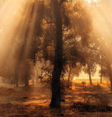 Beautiful lights in the morning — Foto Stock