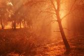 утренний свет в лесу — Стоковое фото
