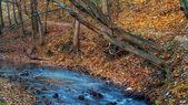 Floresta de outono bonita e rio na noruega. — Foto Stock