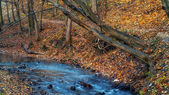 Vackra hösten skogen och river i norge. — Stockfoto