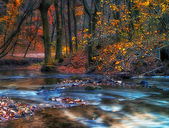 Beautiful river in the autumn forest — Foto de Stock