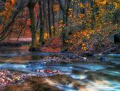 Prachtige rivier in de herfst bos — Stockfoto