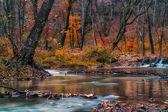 森の中の美しい川 — ストック写真