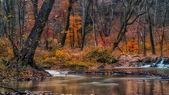 Hermoso río en el bosque — Foto de Stock