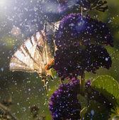 Fjäril på lila vilda blomma — Stockfoto