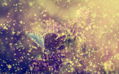 Blue butterfly and purple wild flowers in heavy rain — Stock fotografie
