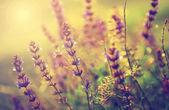 Foto vintage de flor selvagem no pôr do sol — Foto Stock
