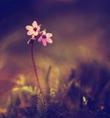 Vintage photo of wild flower in sunset — Stock Photo
